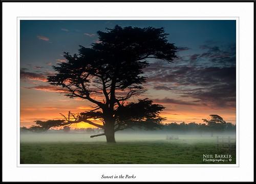 sunset mist fog nikon ngc ceder neilbarkerphotography