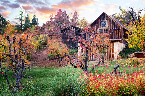 autumn sunset vineyard winery placerville eldoradocounty boegerwinery