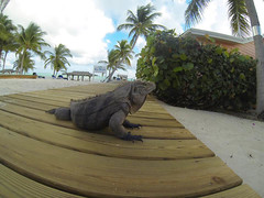 Little Cayman Resort