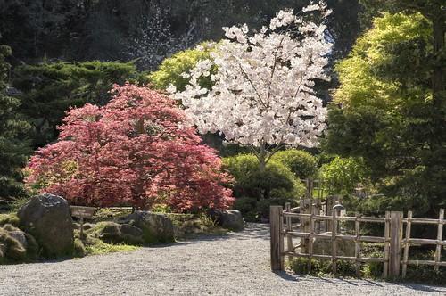 hakonegardens saratoga california spring bloom sakura japanesegarden garden hdr 3xp nex6 photomatix fav50 blossom siliconvalley sanfranciscobay