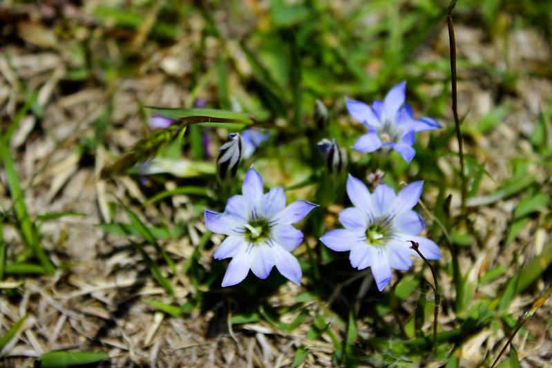 2014-05-04_00896_九州登山旅行.jpg