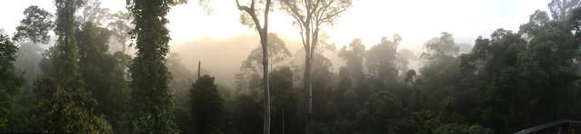 Danum Valley at Dawn