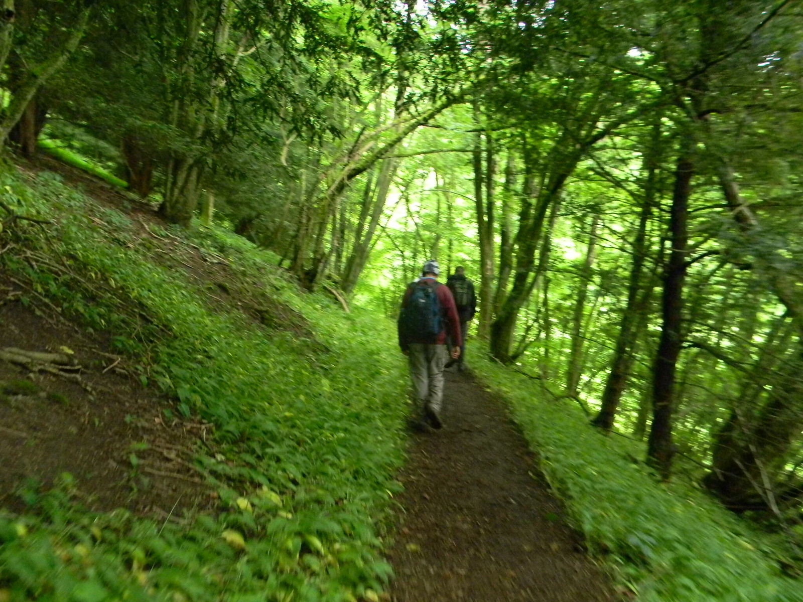Through wild garlic Petersfield to Selbourne