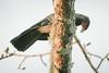 Manu Wildlife Center, Manu National Park, Paucartambo-Manu, Peru by Paul A Thomas