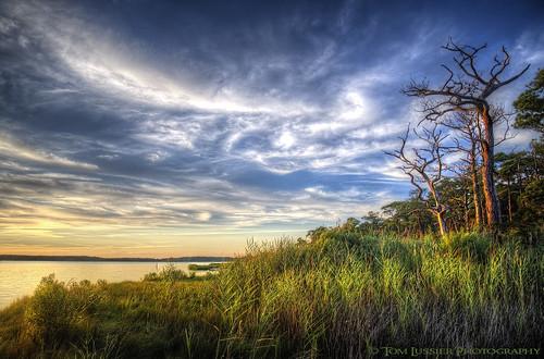 sunset usa tree water landscape nikon delaware d700 tomlussier