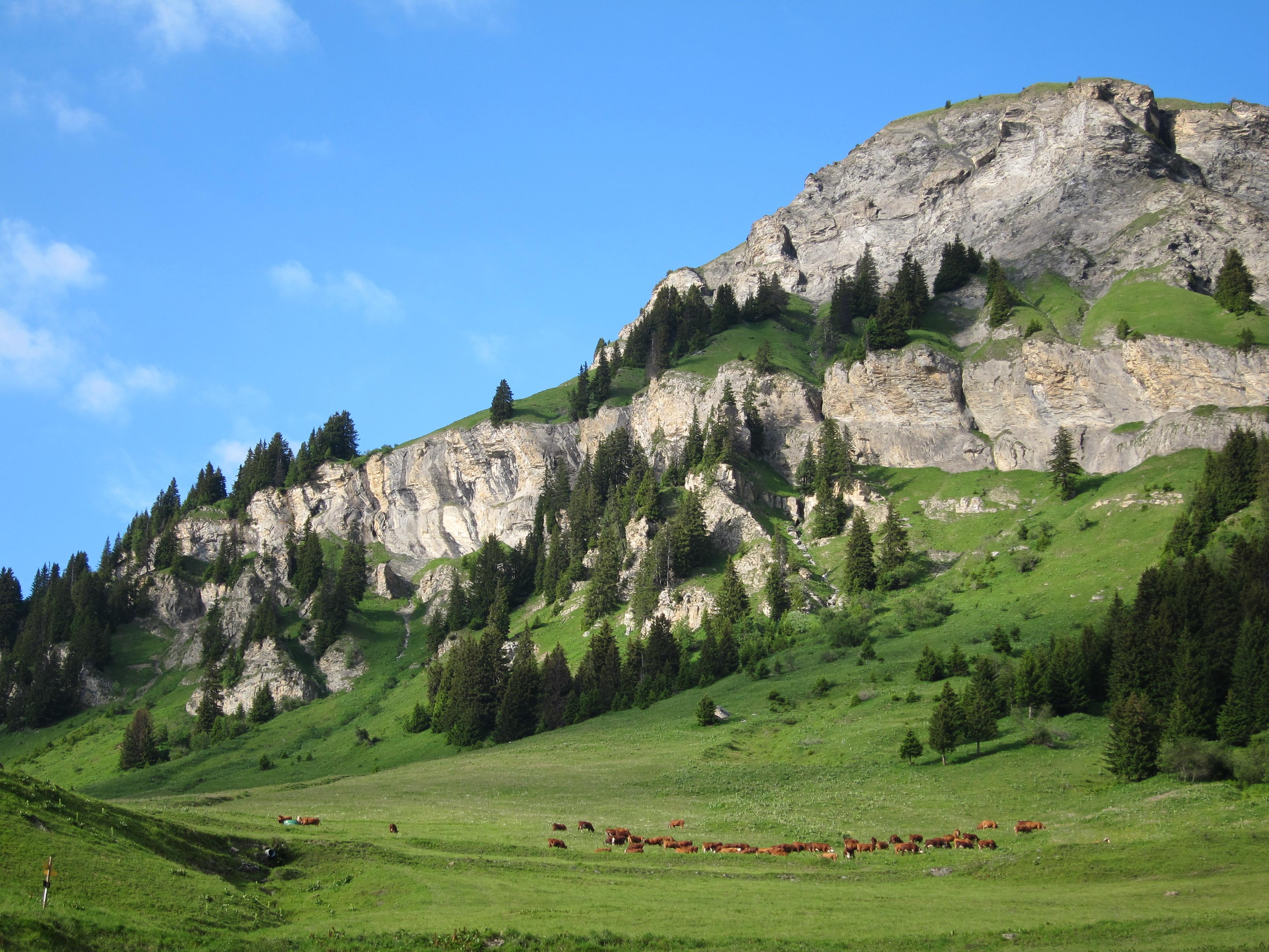 Granier alpage Plan Pichu © M. NGuyen - Fondation Facim