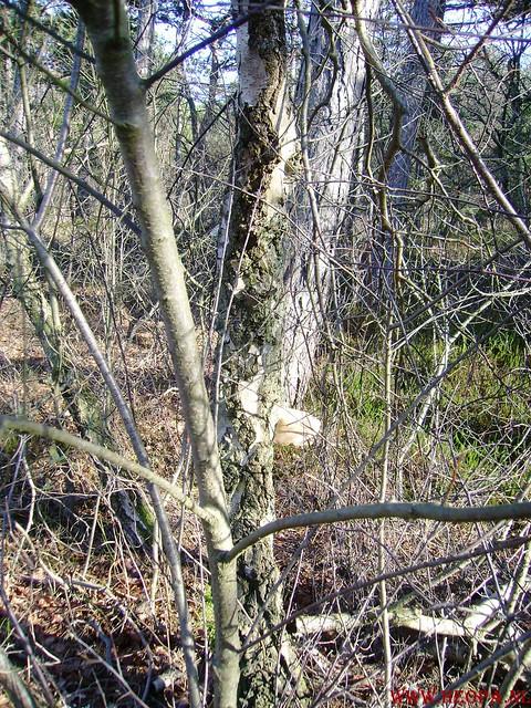 Schoorl 10-02-2008 25 Km (51)