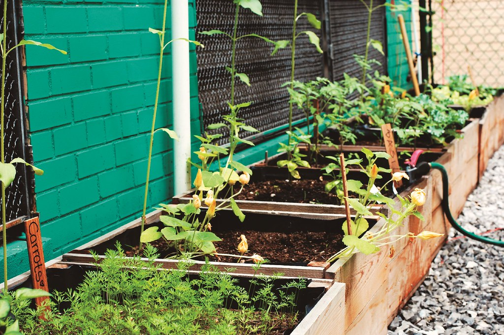 Start A Rooftop Container Garden Brooklyn Botanic Garden
