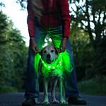 2016-06-07_22-29-35 - Frau mit Hund in Bewegung - Fun - Night