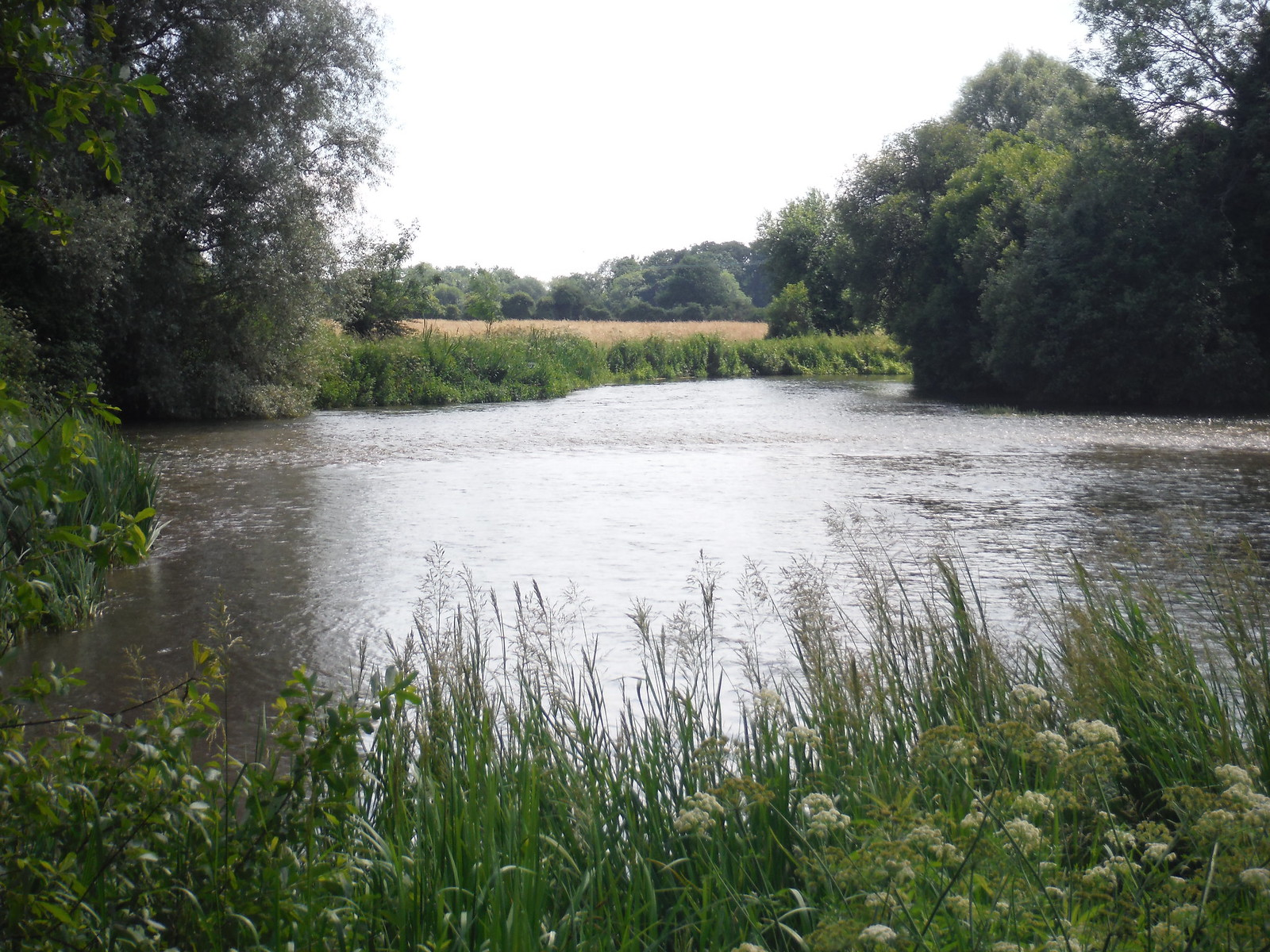 River Test, Houghton SWC Walk 265 - Dean to Mottisfont and Dunbridge
