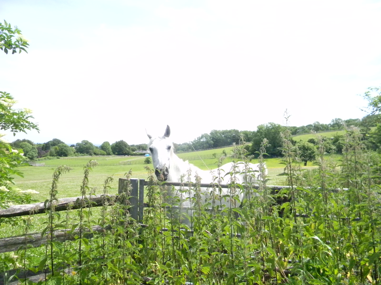 Horse in a field Hassocks to Brighton