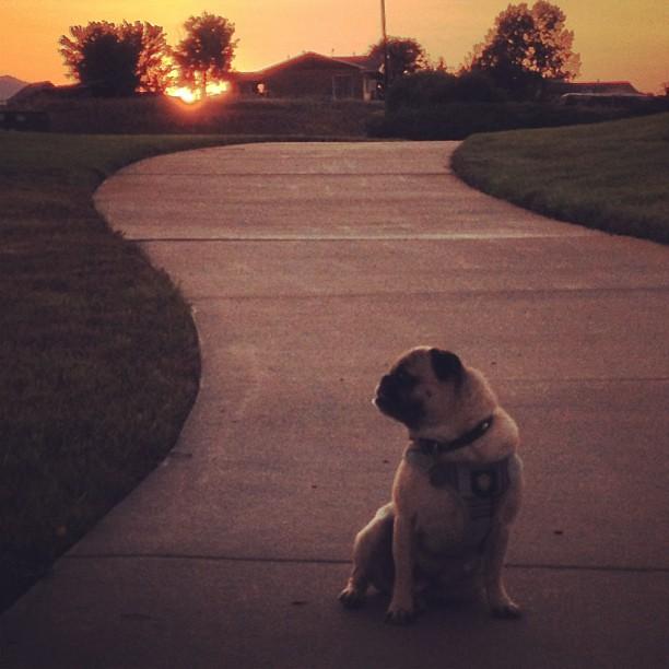 Spanky at sunset