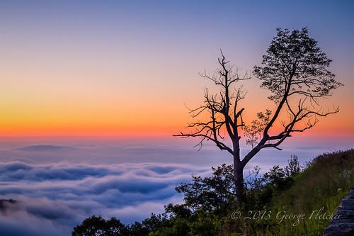 colors grass silhouette clouds sunrise shenandoahnationalpark