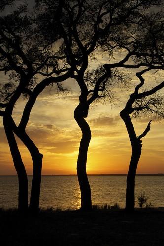 trees sunset sea sky beach water silhouette clouds canon florida explore okaloosa northwestflorida choctawhatchee rawhideprocessed bino99
