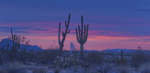 pink blue sunset arizona cactus green water fountain purple dusk scottsdale reservation eveninglight scenicview fountainhills fortmcdowell