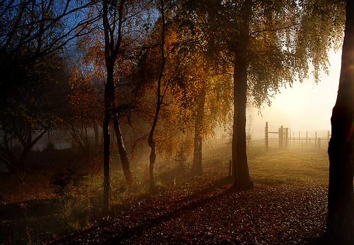 morning mist trees flickrelite publicdomaindedicationcc0 geotagged flickrlover freephotos cco