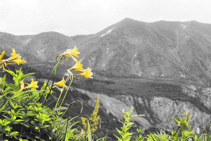 高山植物_10