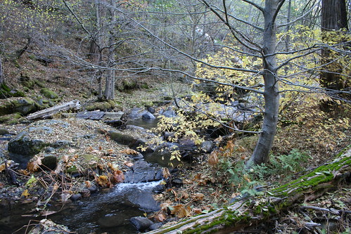 california travel autumn trees fall creek landscape rocks hiking sierra nationalforest