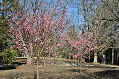 The grounds at Sertoma Art Center captured the club's photographer's attention. IT'S REALLY TRUE THAT SPRING IS JUST AROUND THE CORNER. JUST ASK THE CHERRY TREES!