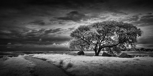 blackandwhite usa galveston tree june dark landscape photography photo moody texas photographer image fav50 unitedstatesofamerica fineart fav20 photograph infrared 100 24mm fav30 f71 fineartphotography 2016 commercialphotography fav10 fav100 720nm fav40 fav60 galvestoncounty fav90 fav80 fav70 ¹⁄₂₀₀sec tse24mmf35lii highlandbayou mabrycampbell june32016 20160603campbellimg8147