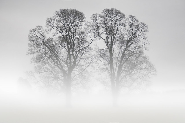 Twins in the Mist