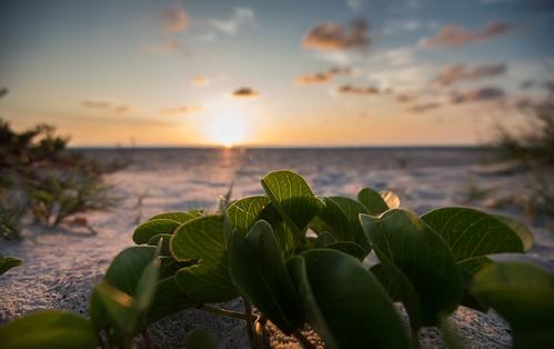 sunrise ocean clouds sky nikond810 beach sand water waves grass