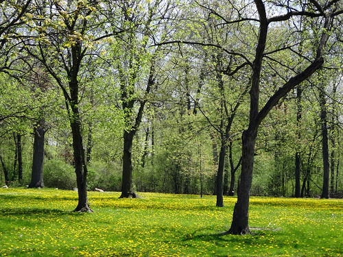 park trees grass spring michigan dandelions trenton downriver elizabethpark waynecountyparks