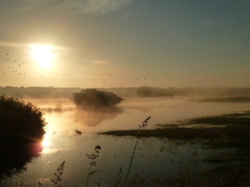 sunrise sonnenaufgang morgennebel