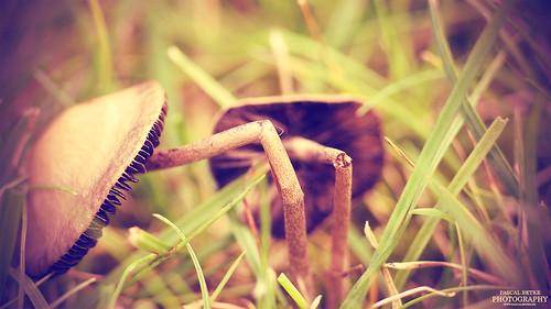 Magic Mushroom #2   by diablopb