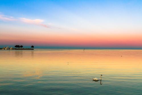 sunset red orange water swan purple unitedstates michigan lakestclair saintclairshores f1crazed