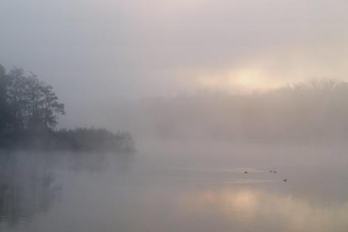 morning fog sunrise thumbsup brouillard challengeyouwinner friendlychallenges thechallengefactory herowinner storybookttwwinner titole favescontestfavoriteson nicolefaton