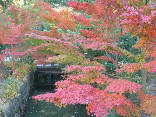 2013/11/30 (土) - 16:11 - 鎌倉の紅葉 ー 鎌倉国宝館の前