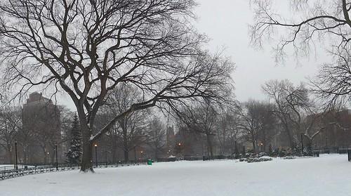 Krishna Tree Snow | by GammaBlog