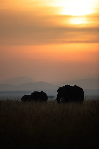 silhouette sunrise landscape dawn kenya safari elephants masaimara canonef500mmf4lisii canoneos1dxmarkii