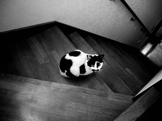 Cat on stairs | by 50¢