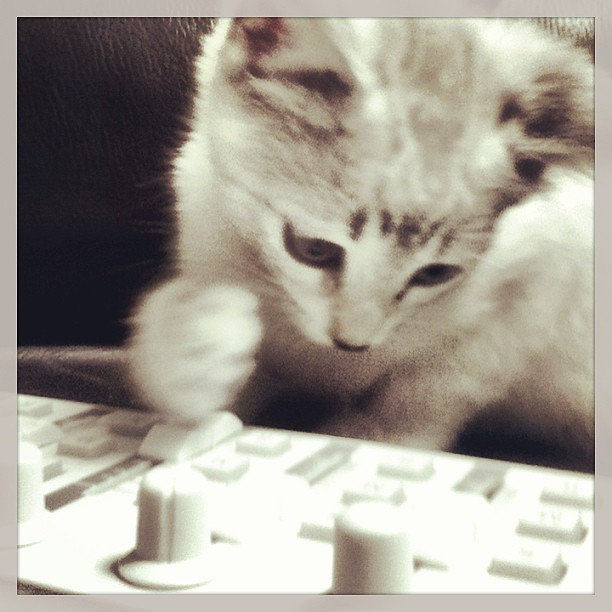 Drop The Bass Bitch Cat Gato Gatito Face Fun Kitt Flickr