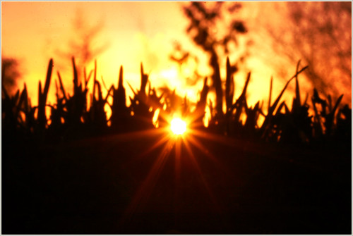 light sunset abstract colour grass canon landscape febuary