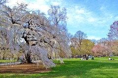 Central Park-Great Lawn, 04.19.14