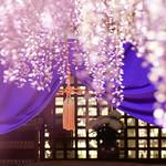 20160426-熊野の長藤 Gyouko-Temple