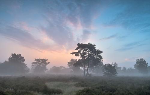 holland netherlands sunrise landscape otterlo hogeveluwe nikon1224 nikond500 guidodekleijn