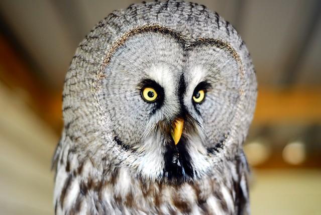 Such a precious Owl