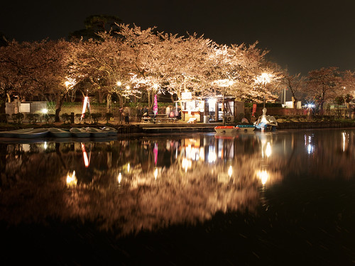 longexposure nightphotography travel trees vacation plant flower reflection tourism nature water beautiful japan season outdoors spring pond flora quiet view personal illumination peaceful nobody illuminated nighttime 桜 cherryblossom 日本 sakura moat japaneseculture touristattraction hanami temporal springtime blooming rm tranquilscene eastasia 花見 cherryblossomviewing nolens japanesecastle traveldestinations beautyinnature alamy 新潟県 niigataprefecture japanesetradition stockcategories 高田城 上越市 高田公園 takadacastle joetsucity springapril2013 jōetsushi takadakoencherryblossomfestival takadacastleparkcherryblossomviewingfestival boatingarena