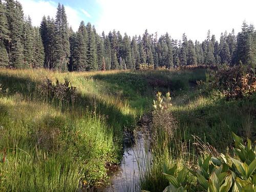 Milk Ranch Meadow, Snow Mountain Wilderness, Mendocino National Forest, California