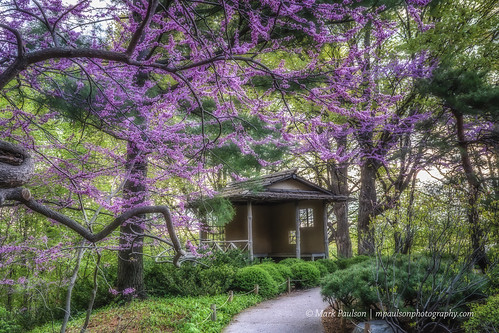 Redbud over Teahouse 2-2©Mark Paulson All rights resv