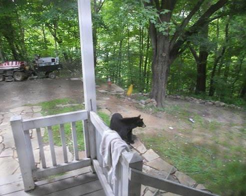 Photo of bear near back porch