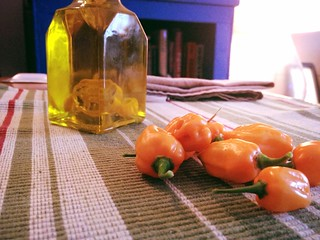 Habanero-Infused Olive Oil | by Texarchivist