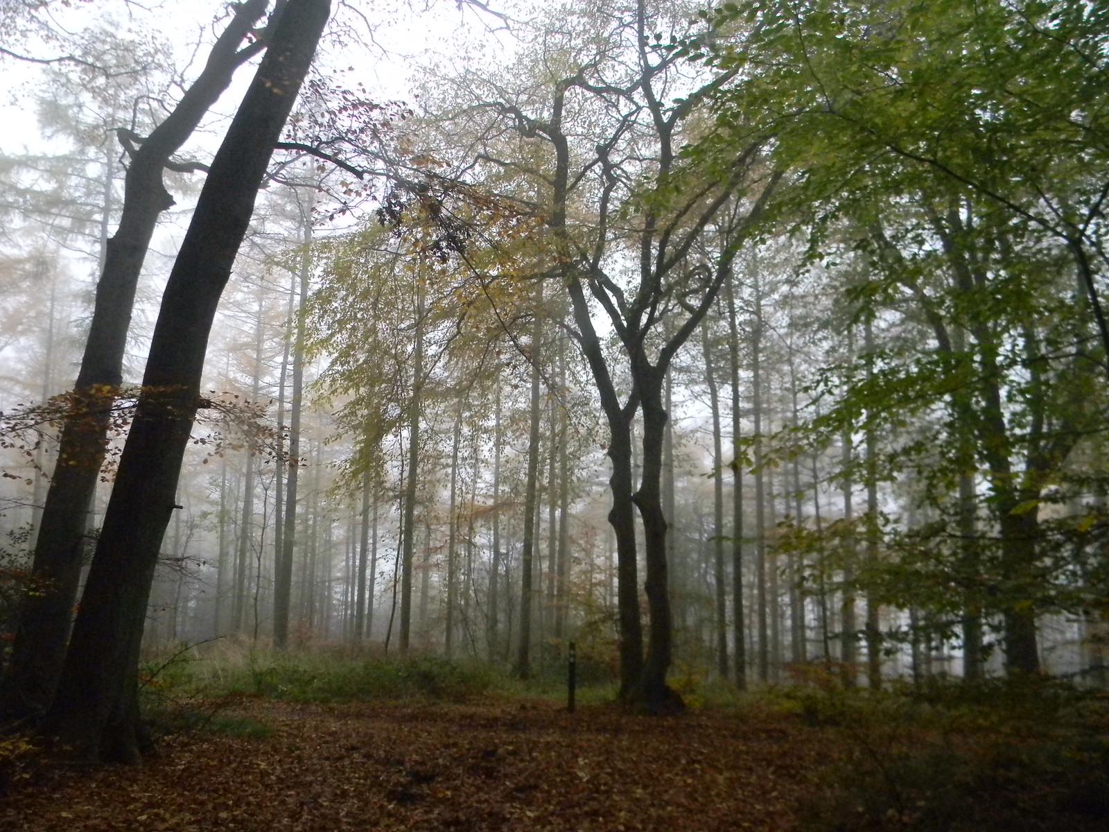 Mist in the trees Little Kimble to Saunderton