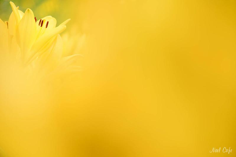 黄色い世界 by Noël Café