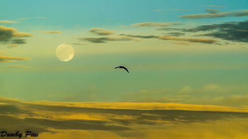 sky moon skyline moonrise