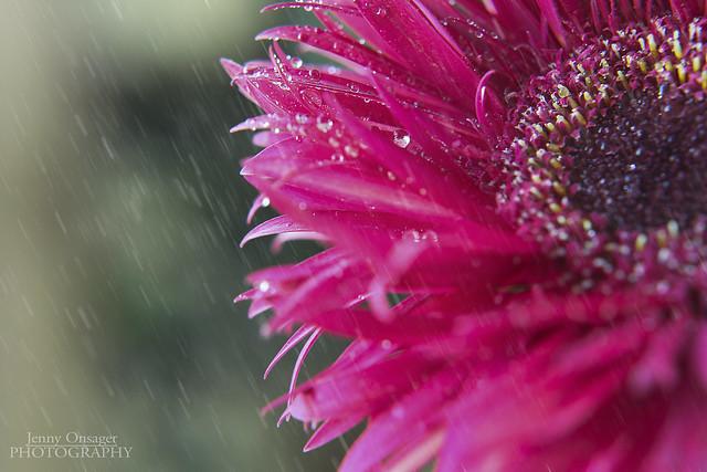 Sunday Morning Rain